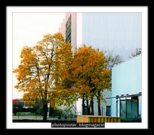 autumnscenes02