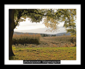 autumnscenes05